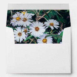 Seaside Daisies | Envelope