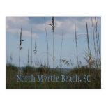 ocean, seaside, dunes, landscapes, north, myrtle,