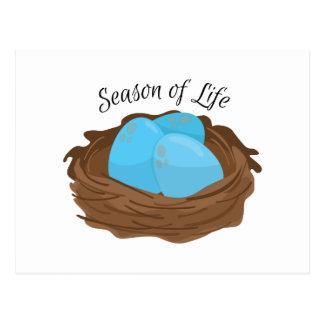 Season of Life Postcard