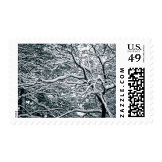 Seasonal Winter Weddings Photo Theme Stamps
