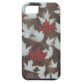 Seasons Change iPhone SE/5/5s Case