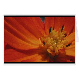 seasons:  flora series [summer] notecard