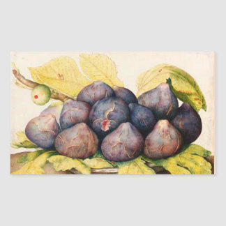 SEASON'S FRUITS / PLATE WITH FIGS AND GREEN LEAVES RECTANGULAR STICKER
