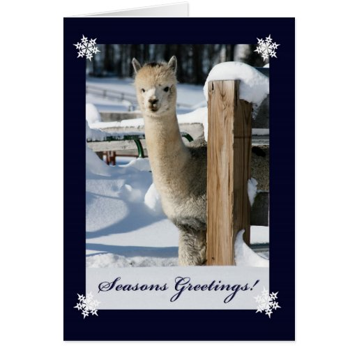 Seasons Greeting Alpaca Card