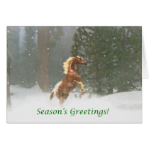 Season's Greetings Appaloosa Horse Card