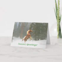 Season's Greetings Appaloosa Horse Holiday Card
