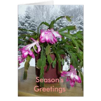 Season's Greetings Cactus Greeting Card
