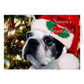 Season's Greetings Christmas Boston terrier Card
