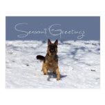 Seasons Greetings German Shepherd in Snow Postcard
