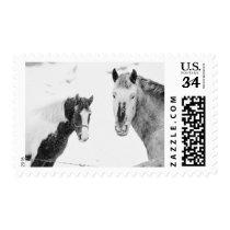 Season's Greetings Photo Horses Snowstorm Postage