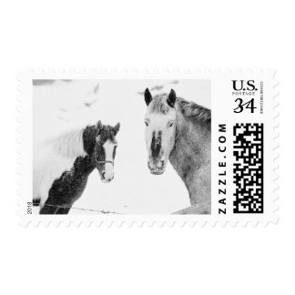 Season's Greetings Photo Horses Snowstorm Postage Stamp