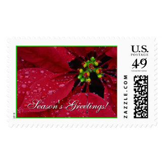 Season's Greetings Poinsettia Postage - Large