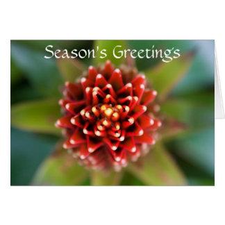Season's Greetings Red Flower Card