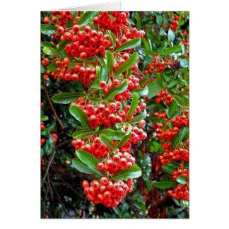 Season's Greetings Rowan Berry/Tree - Y Cards