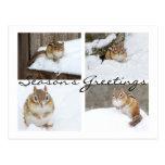 Season's Greetings Snowy Chipmunk Collage Postcard