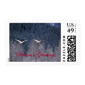 Season's Greetings - Two Trumpeter Swans in Alaska Postage