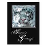 Season's Greetings Winter White Tiger Postcard