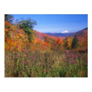 Seasons of Mount Washington Postcard