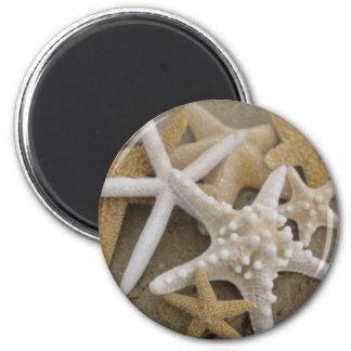 seastars (starfish) 2 inch round magnet