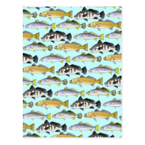 Seatrout and Drum Pattern in blue Postcard
