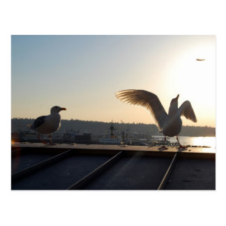 Seattle Seagulls Postcard