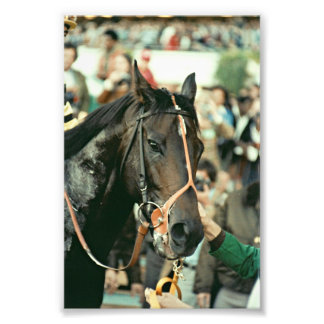 Seattle Slew Thoroughbred 1978 Photo Print