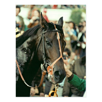 Seattle Slew Thoroughbred Racehorse Photo 1978 Post Card
