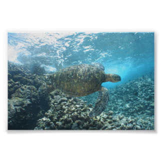 Seaturtle at the Shorebreak Poster