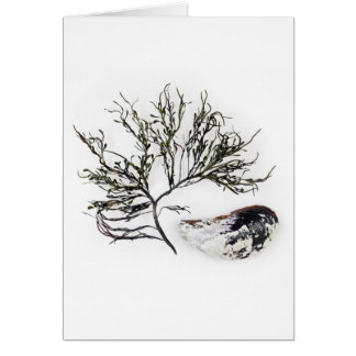 Seaweed and Mussel Shell Notecard