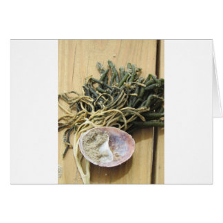 Seaweed and Seashells Greeting Card