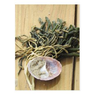 Seaweed and Seashells Postcard