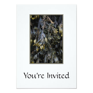 Seaweed. Card