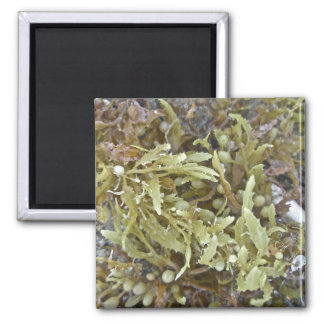 Seaweed Coordinating Items Magnet