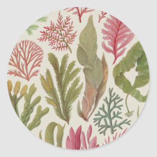 Seaweed Family Classic Round Sticker