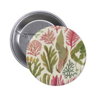 Seaweed Family Pinback Button