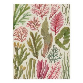 Seaweed Family Postcard