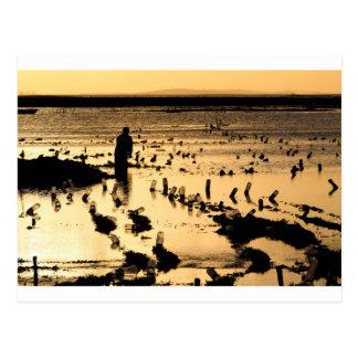 Seaweed farm golden sunset postcard