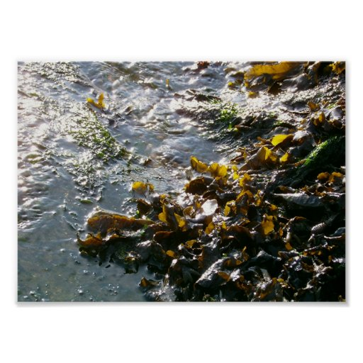 =-=-=-seaweed=-=-= impresiones