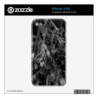 Seaweed in Black and White. iPhone 4S Decal