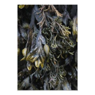 """Seaweed. 3.5"""" X 5"""" Invitation Card"""