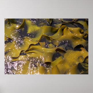 Seaweed New Zealand Print
