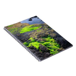 Seaweed Spiral Note Books