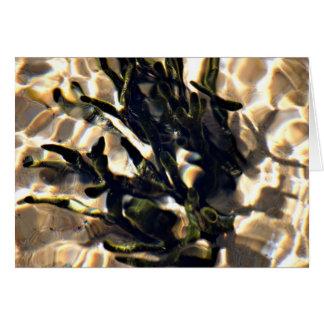 Seaweed ocean sea marine life beaches greeting card