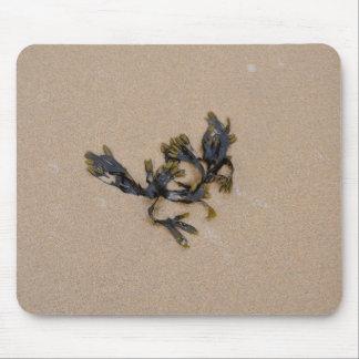 Seaweed on a Sandy Beach Cornwall England Mouse Pad