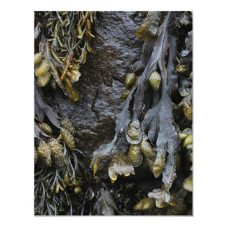 "Seaweed Picture. 4.25"" X 5.5"" Invitation Card"