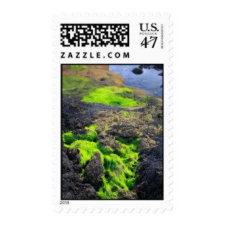Seaweed Postage Stamp