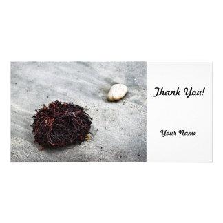 Seaweed Roots Card