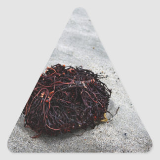 Seaweed Roots Triangle Sticker