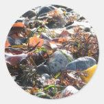 Seaweed Round Sticker