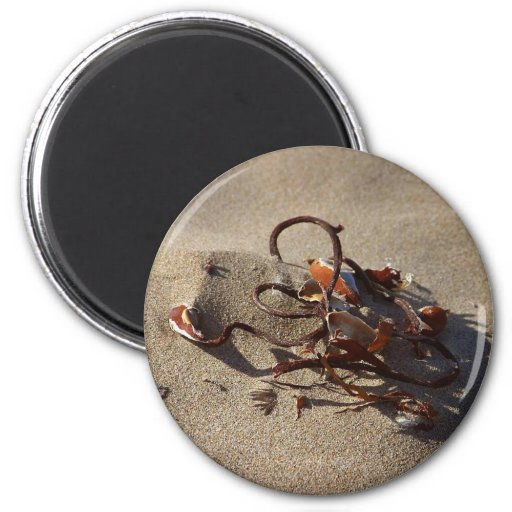 Seaweed Sand Beaches Fridge Magnets
